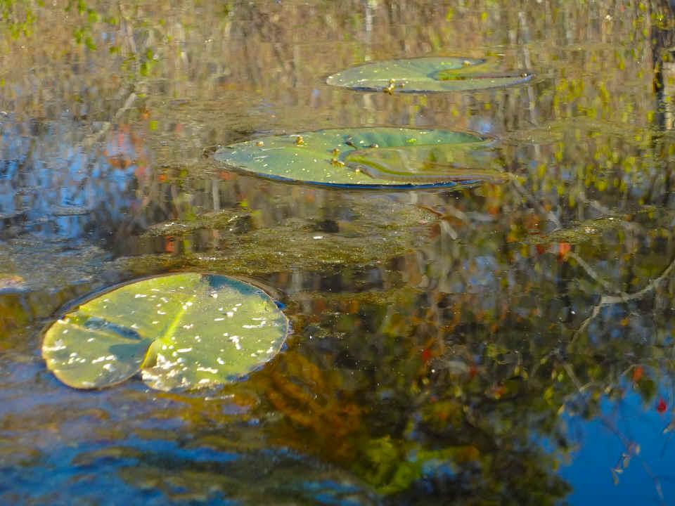 Nature Photos On Natureisamazing Com